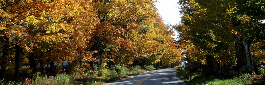 Foliage in North Shrewsbury